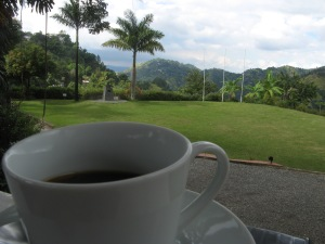 Jamaican Blue Mountain coffee at the Craighton Estate. Photo by Kimberley (c)2013