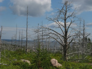 The Jack Pine Trail (post-fire scene) Photo by Kimberley (c)2014
